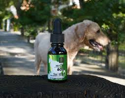 Benefits of Using CBD Oil for Dogs
